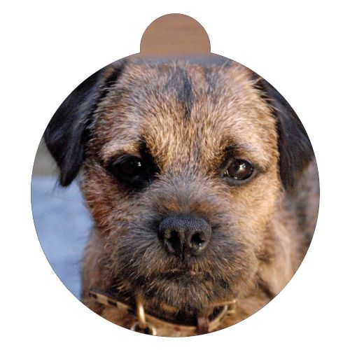 Border Terrier Picture ID tag
